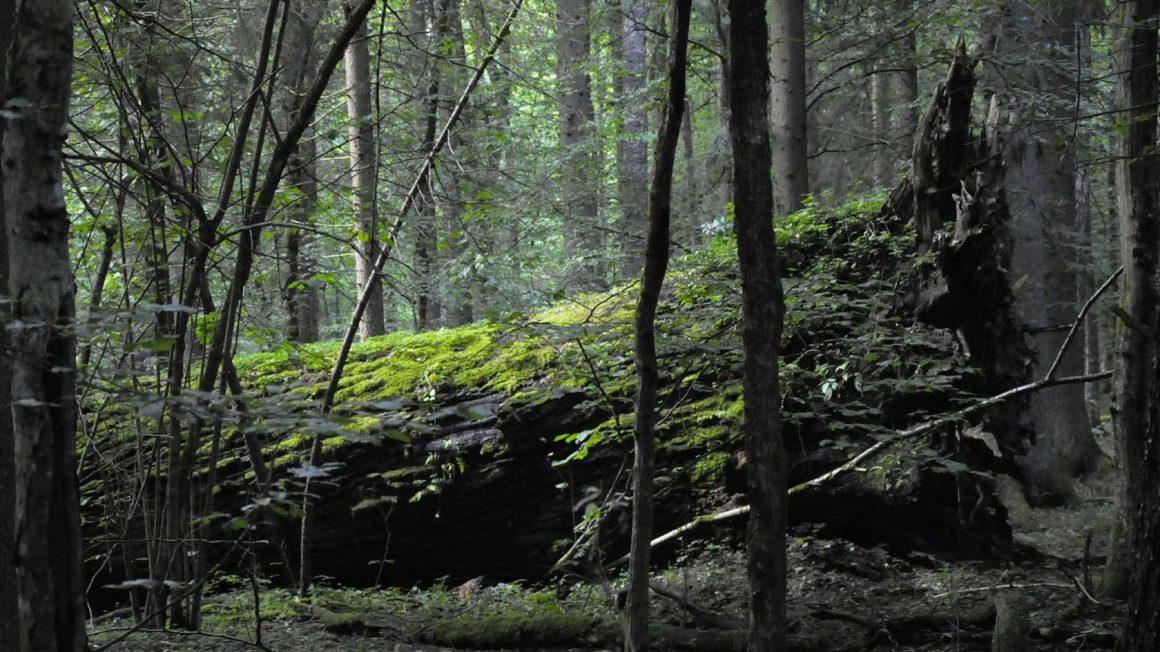 Dzikie jest piękne