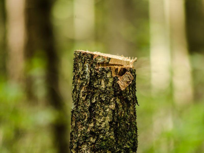 Drzewo (pixabay)