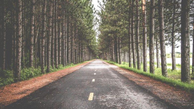drzewa przy drodze (pixabay)