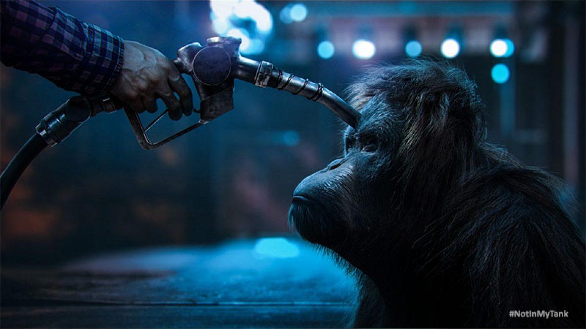 Orangutan #NotInMyTank