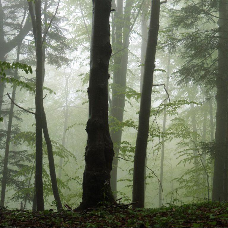 Dzikie Karpaty