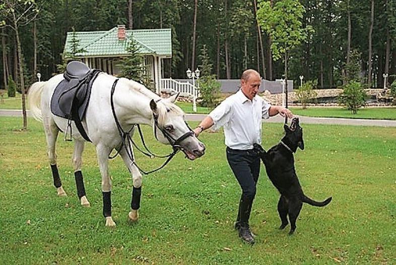 Władymir Putin ilabradorka Koni