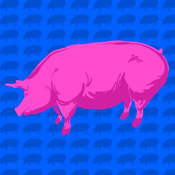 Muskularna świnia