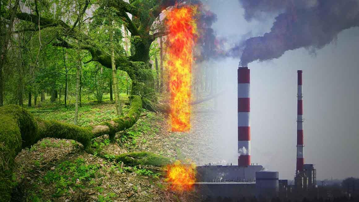 NIE dla spalania lasów!