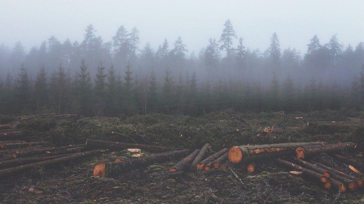 deforestacja