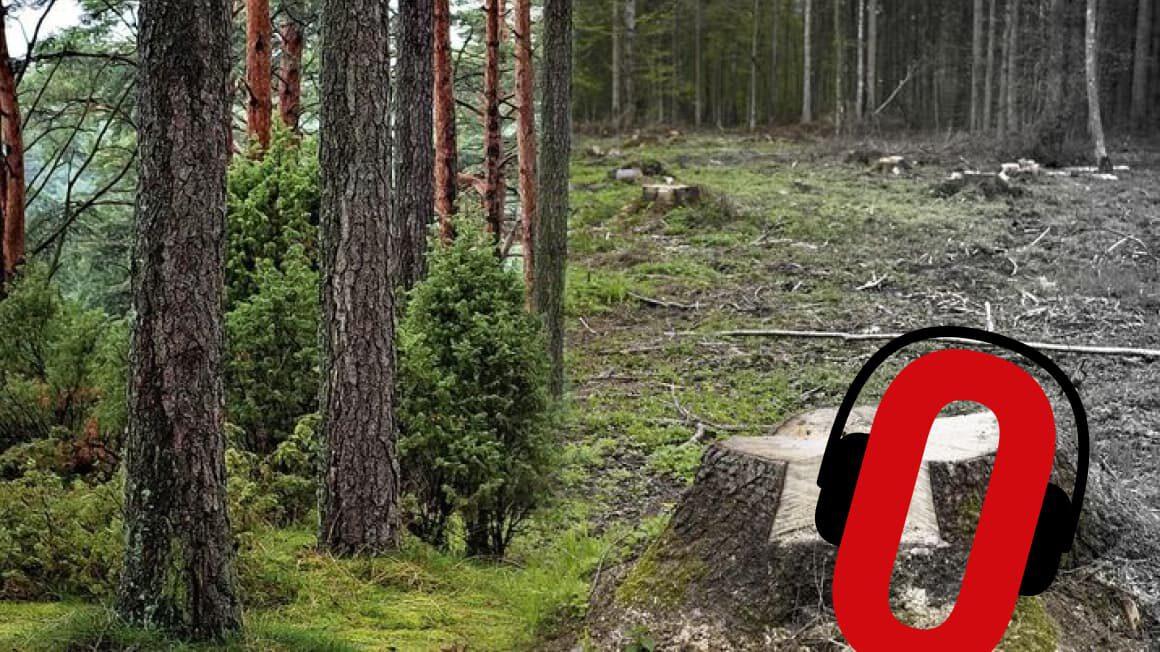 Lasy i Obywatele. Zanim wytną Twój las…