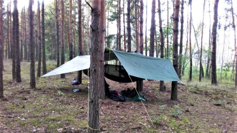 nocowanie_w_lesie